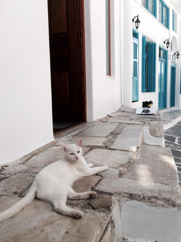 mykonos-cat