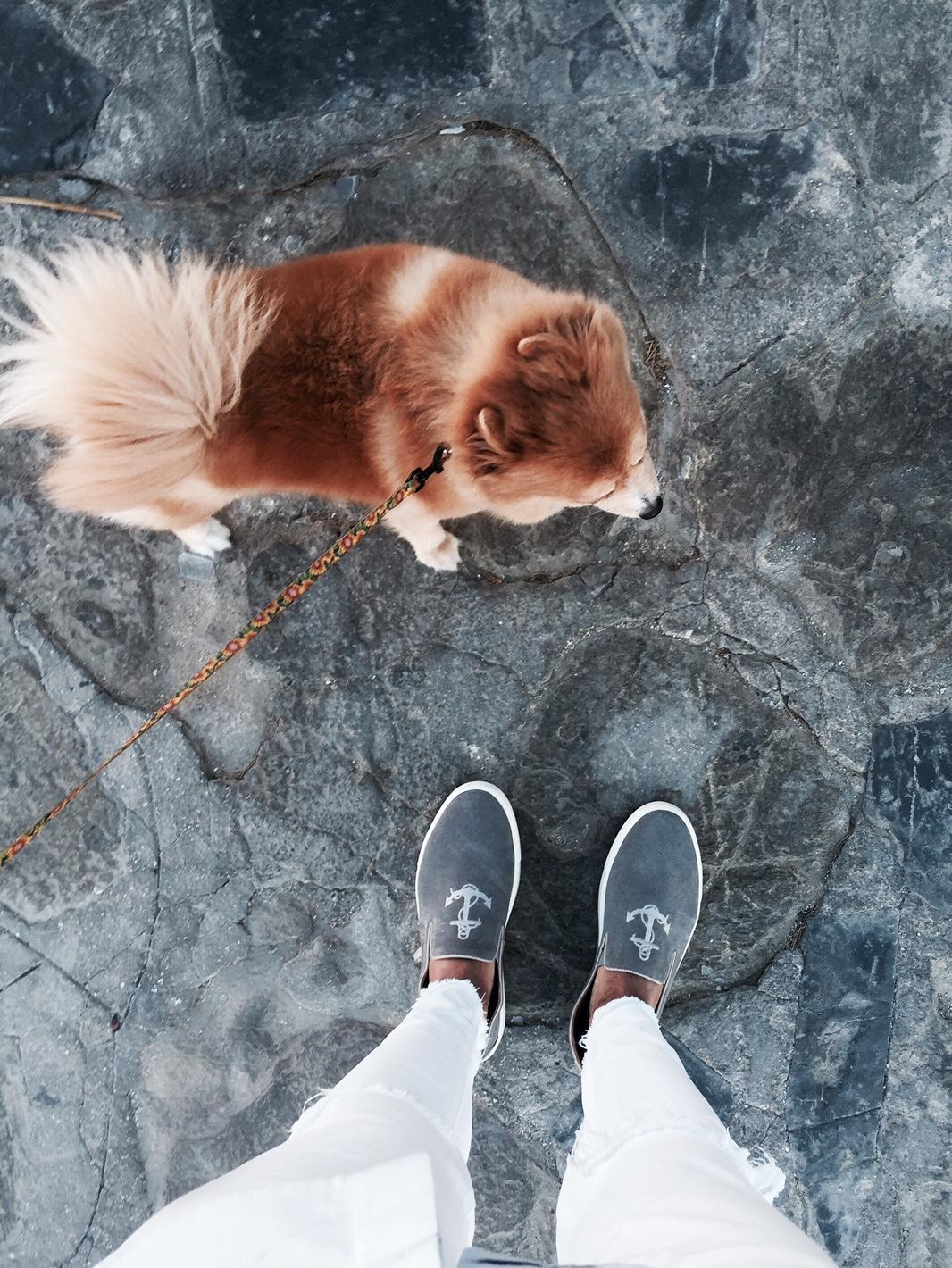 mykonos-dog-streetstyle